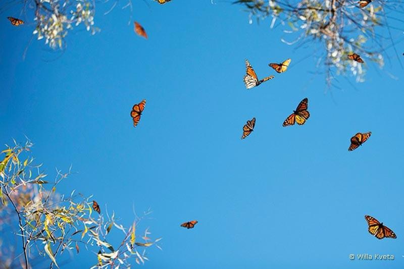 coronado-butterfly-grove
