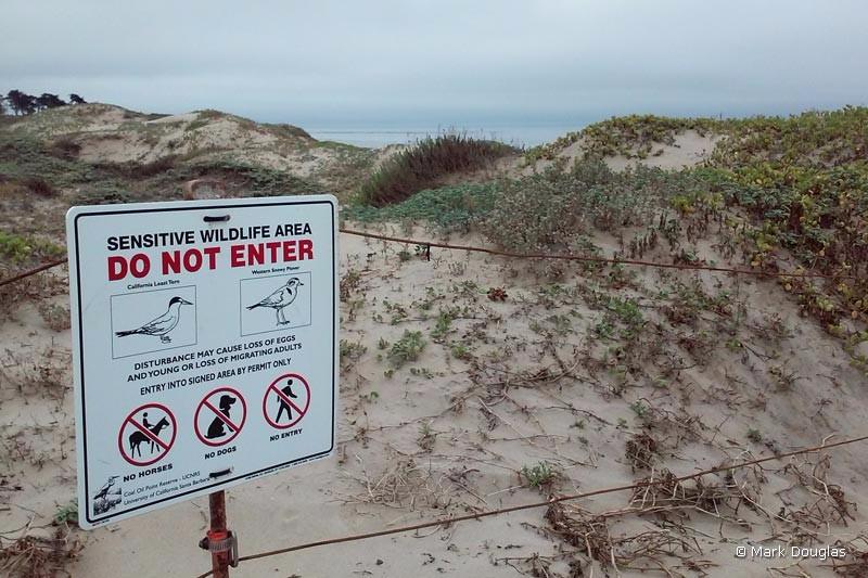 pond-dune-trail-7